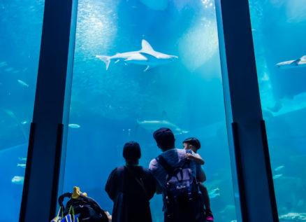 海の生き物たちと「こころ」が通う素敵な世界